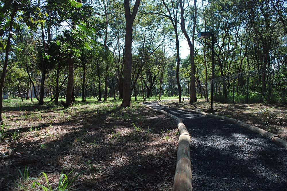 bosque-das-caviunas7